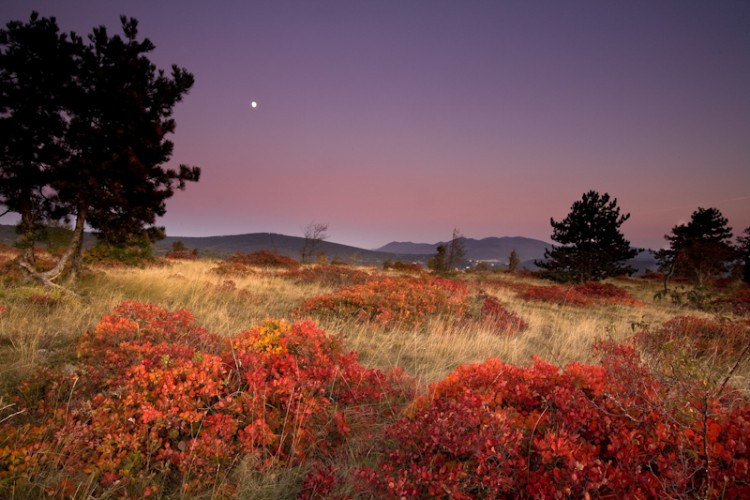Autumn moonrise, Carso, Italy