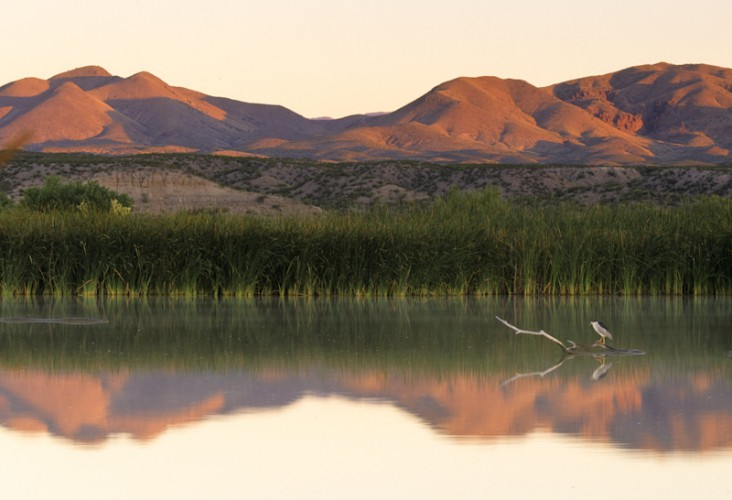 Bosque del Apache, New Mexico, U.S.A.