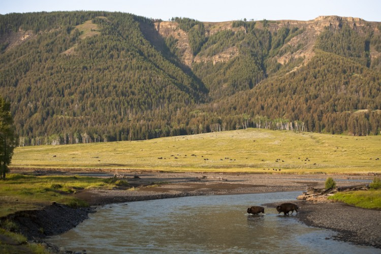 Lamar Valley, Yellowstone N.P., Wyoming, U.S.A.