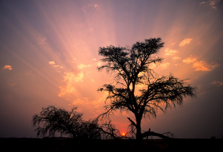 Last Rays, Kgalagadi Park, South Africa