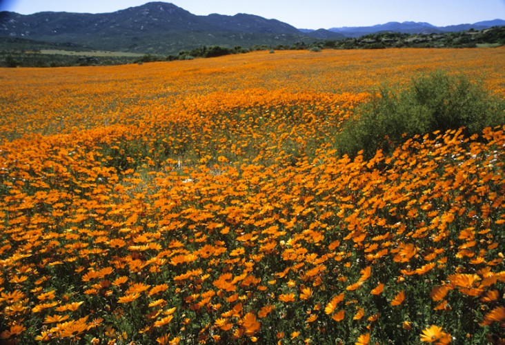 Namaqualand Tapestry, South Africa