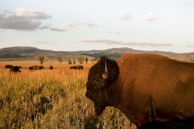 Once upon a time , Bison, Wyoming, U.S.A.