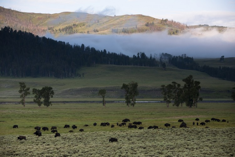 Sunrise in Lamar Valley, Yellowstone N.P., Wyoming, U.S.A.
