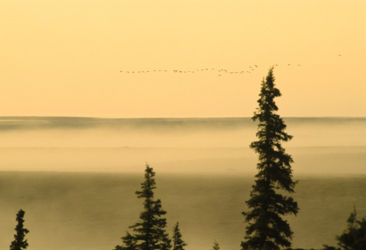 The Migration, Thelon Sanctuary, Canada