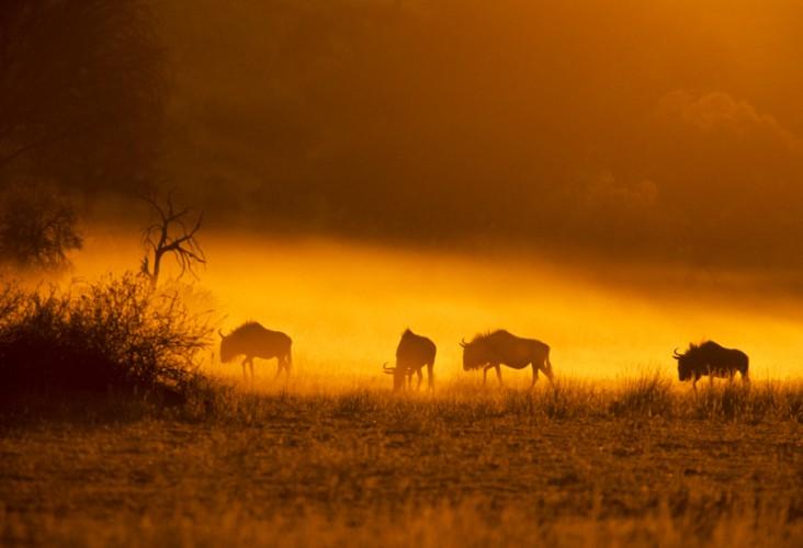 The dry season - Kgalagadi T.P