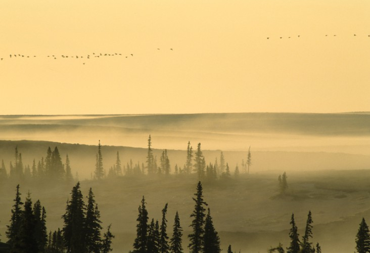 Thelon Sanctuary, Northwest Territories, Canada