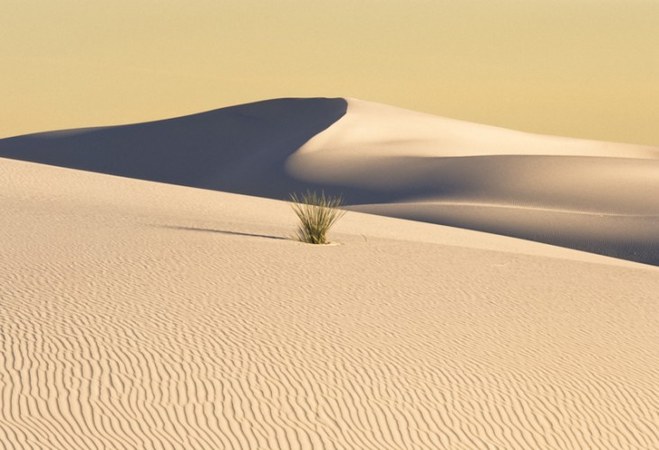 White Sands, New Mexico, U.S.A.