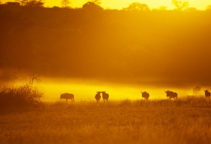 African Sunrise, Kgalagadi T.P., South Africa
