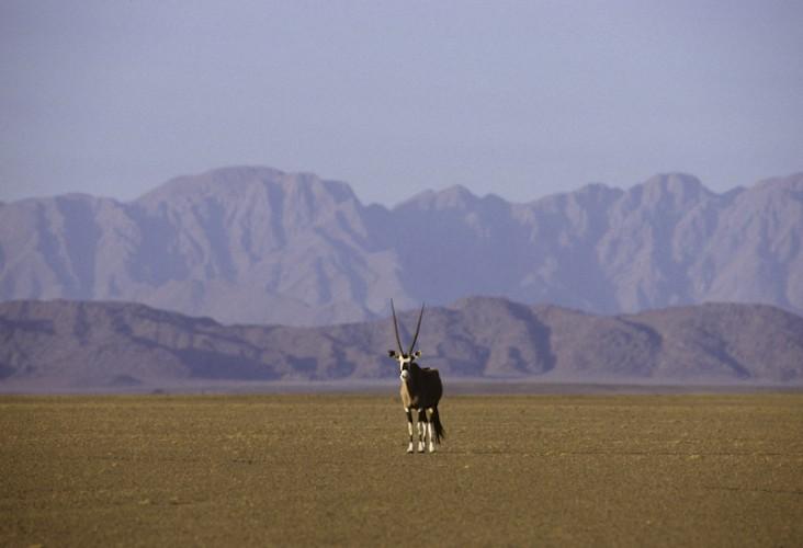 Alone, Orix, Namibian Desert, Namibia