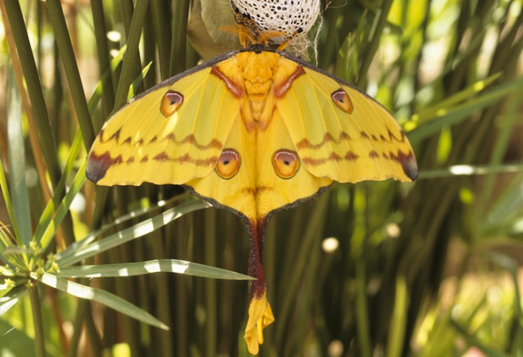 Butterfly, Madagascar
