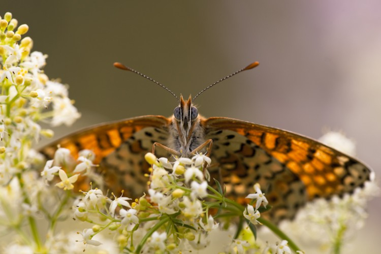 Butterflie's Eyes, Carso (Trieste), Italy