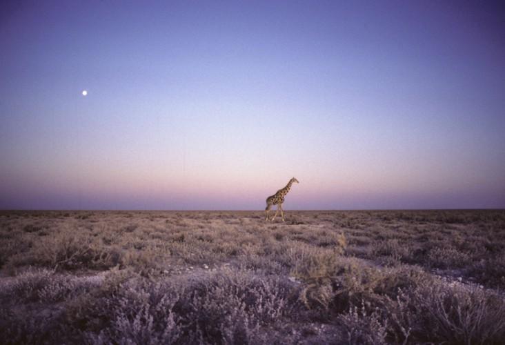 Twilight on Etosha Pan, Etosha Park, Namibia