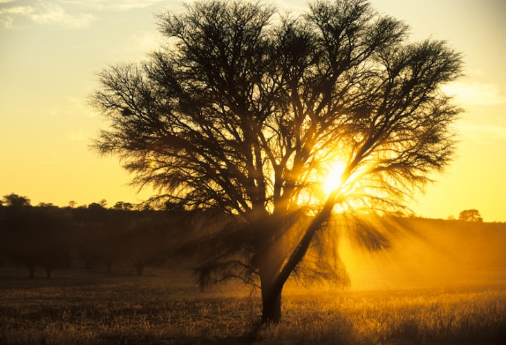 Golden Light, Kgalagadi T.P, South Africa