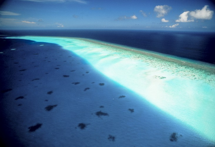 Maldivian Reef, Indian Ocean