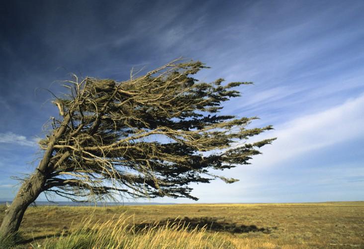 Patagonian Wind, Patagonia, Argentina