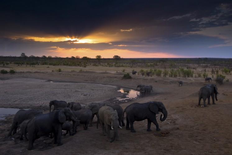 Sunset, Hwange N.P.,Zimbabwe