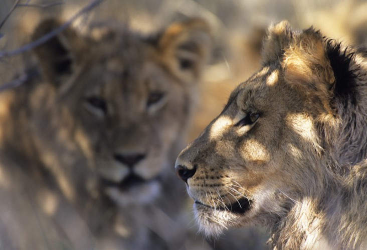 The brothers, Kgalagadi T.P