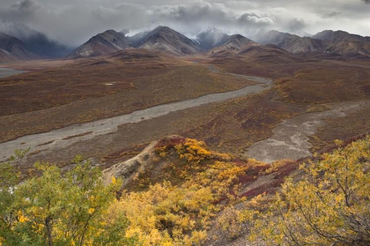 Polychrome Pass-Denali N.P.-Alaska