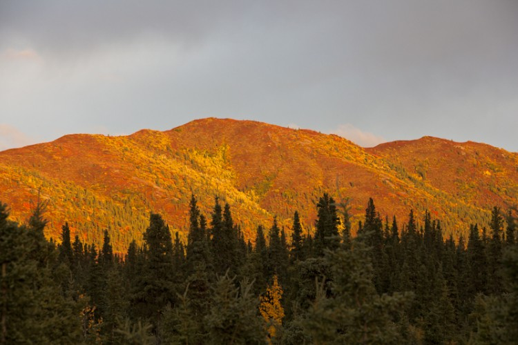 Sunset on Teklanika Hills-Denali N.P.-Alaska