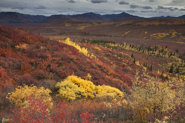 Last day of Autumn-Denali N.P.-Alaska