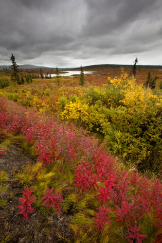 Fall Colors-Alaskan Interior