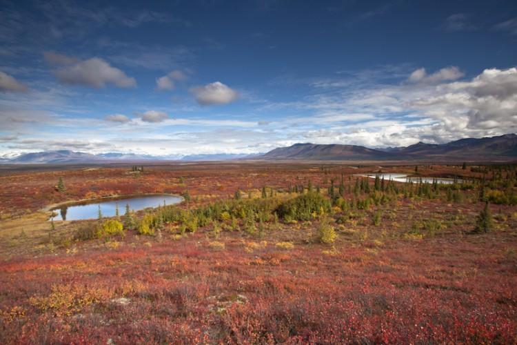 Monachan Flat-Denali Highway-Alaskan Interior
